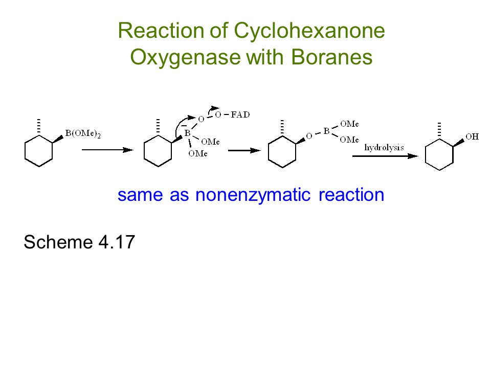 Scheme 4.17 same as nonenzymatic reaction Reaction of Cyclohexanone Oxygenase with Boranes