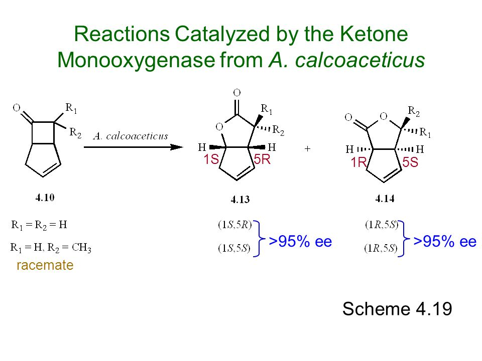 Scheme 4.19 >95% ee Reactions Catalyzed by the Ketone Monooxygenase from A. calcoaceticus 1S 1R5S 5R >95% ee racemate