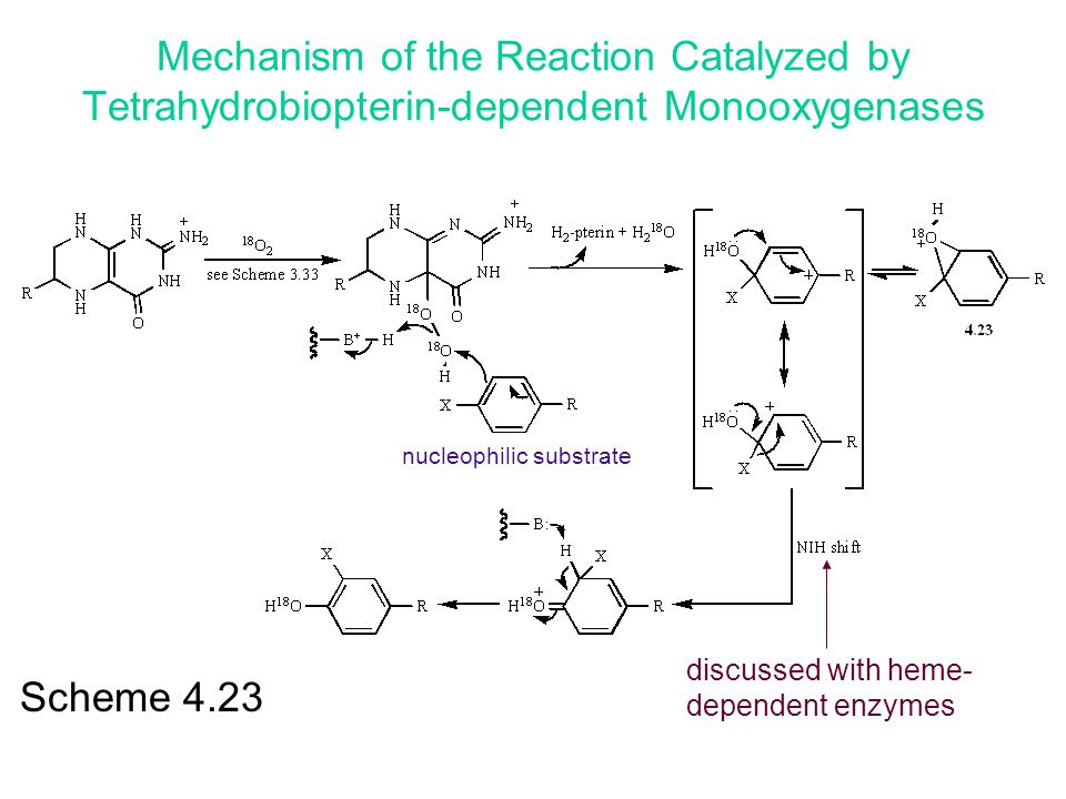 Scheme 4.23 discussed with heme- dependent enzymes Mechanism of the Reaction Catalyzed by Tetrahydrobiopterin-dependent Monooxygenases nucleophilic su