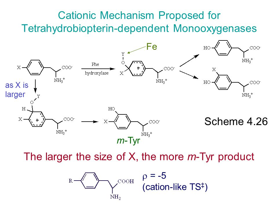 Scheme 4.26 Fe as X is larger The larger the size of X, the more m-Tyr product Cationic Mechanism Proposed for Tetrahydrobiopterin-dependent Monooxyge