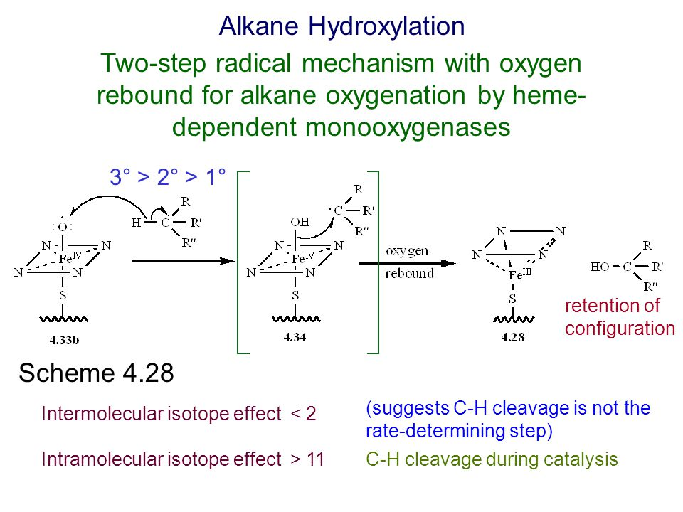 Scheme 4.28 Alkane Hydroxylation 3° > 2° > 1° Intermolecular isotope effect < 2 (suggests C-H cleavage is not the rate-determining step) retention of