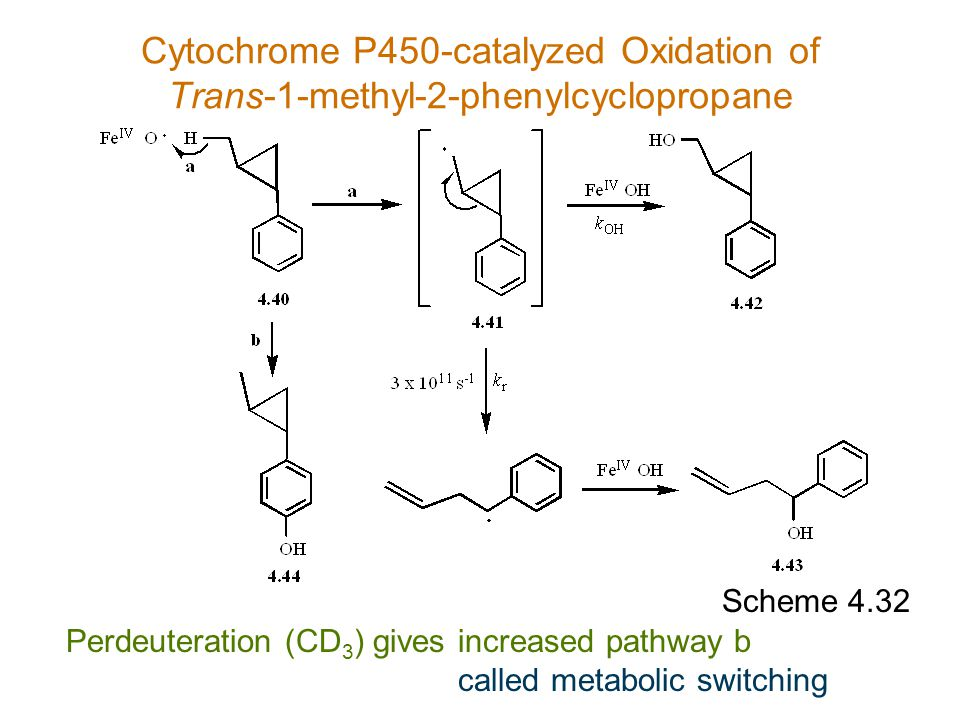 Scheme 4.32 Perdeuteration (CD 3 ) gives Cytochrome P450-catalyzed Oxidation of Trans-1-methyl-2-phenylcyclopropane increased pathway b called metabol