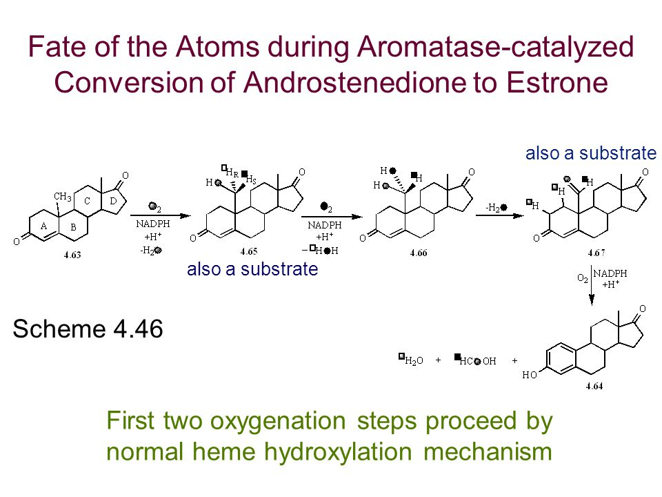 Scheme 4.46 also a substrate Fate of the Atoms during Aromatase-catalyzed Conversion of Androstenedione to Estrone First two oxygenation steps proceed