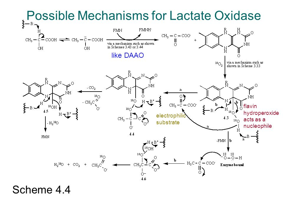 Scheme 4.4 like DAAO flavin hydroperoxide acts as a nucleophile Possible Mechanisms for Lactate Oxidase electrophilic substrate
