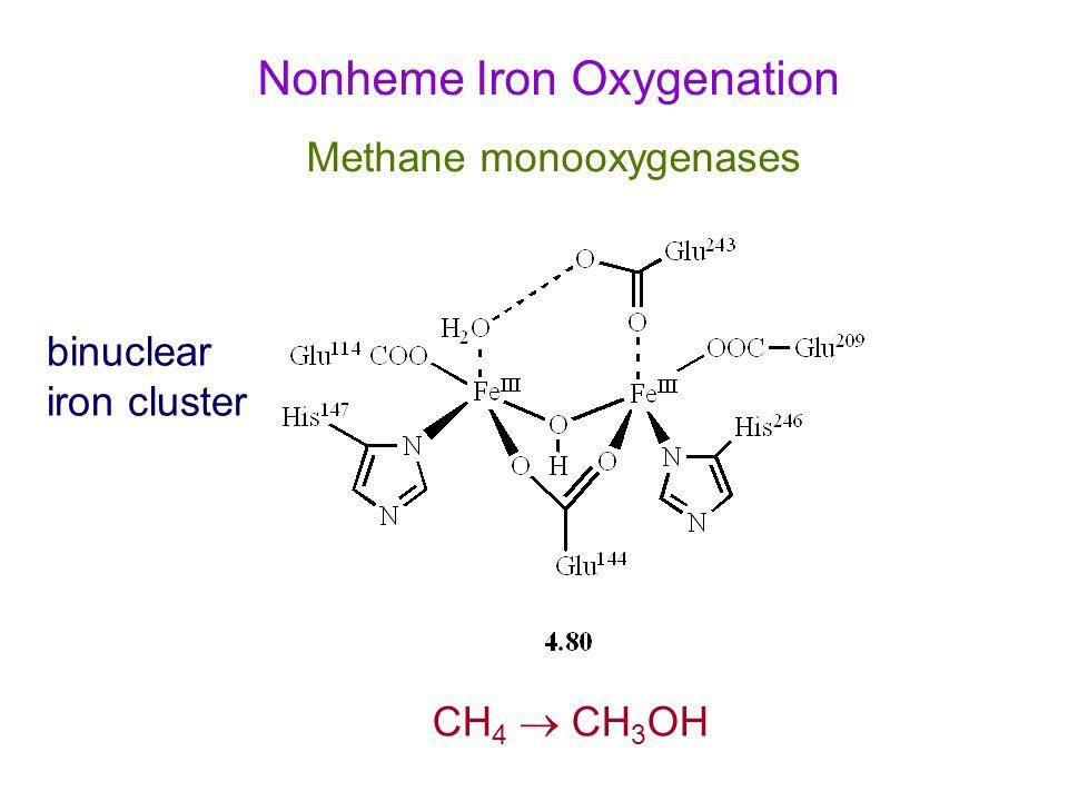 Nonheme Iron Oxygenation Methane monooxygenases binuclear iron cluster CH 4  CH 3 OH