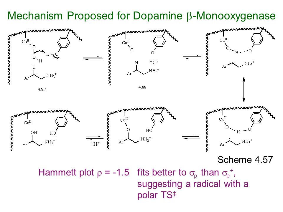 Scheme 4.57 Hammett plot  = -1.5fits better to   than   +, suggesting a radical with a polar TS ‡ +H + Mechanism Proposed for Dopamine  -Monooxy