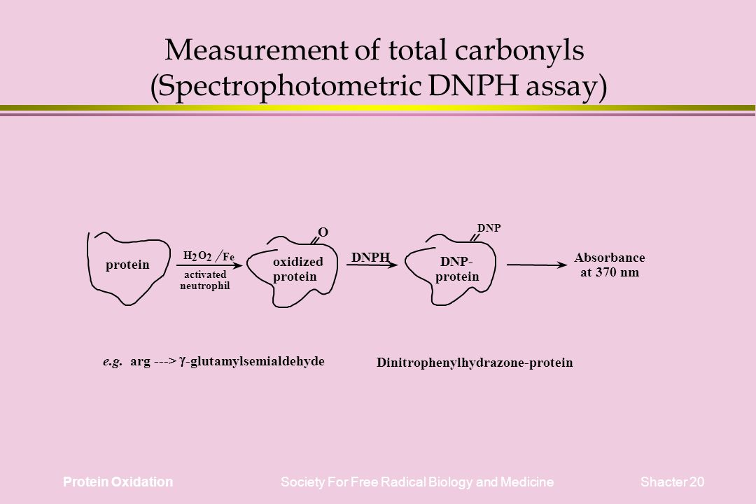 Protein Oxidation Society For Free Radical Biology and Medicine Shacter 20 Measurement of total carbonyls (Spectrophotometric DNPH assay) protein oxidized protein O Fe DNPHAbsorbance at 370 nm e.g.
