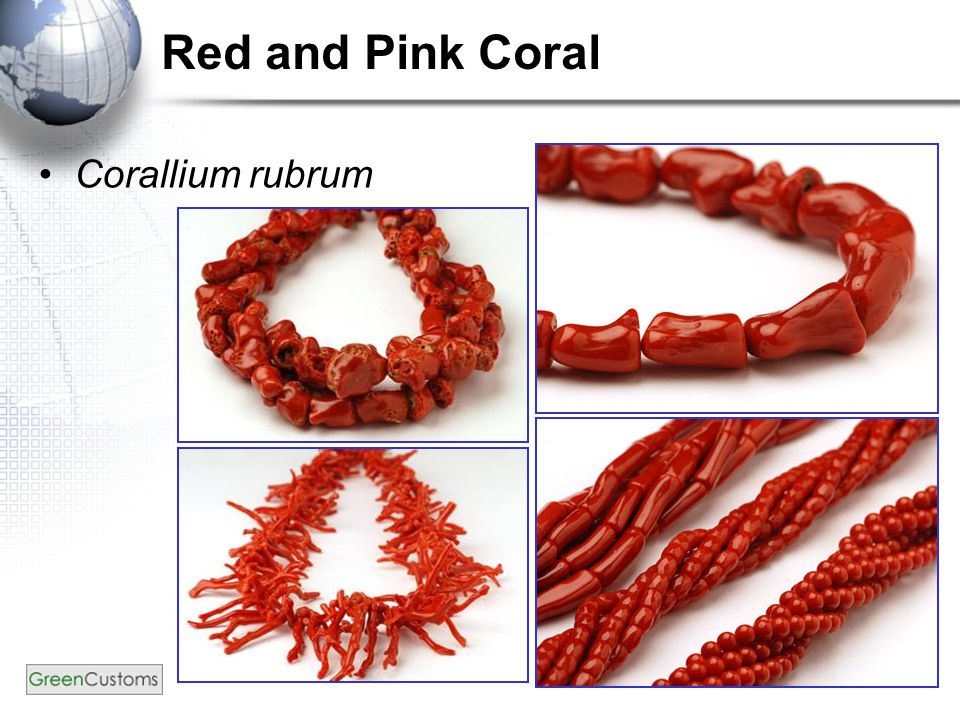15 Red and Pink Coral Corallium rubrum