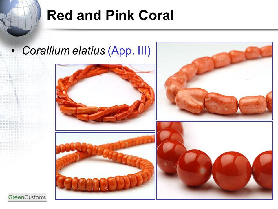 16 Red and Pink Coral Corallium elatius (App. III)