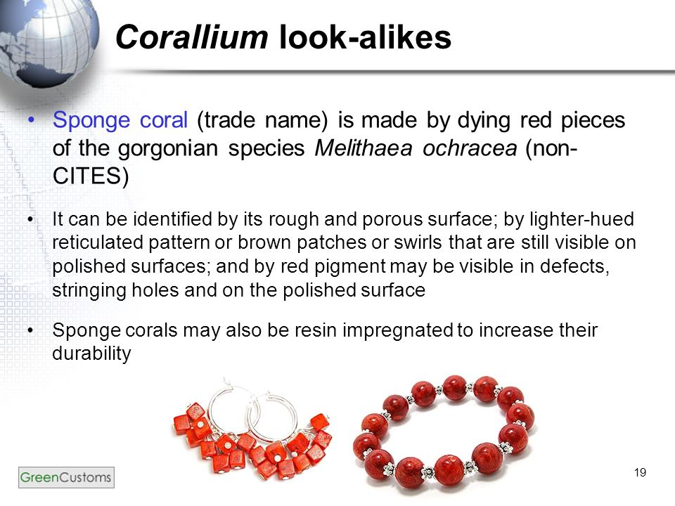 19 Corallium look-alikes Sponge coral (trade name) is made by dying red pieces of the gorgonian species Melithaea ochracea (non- CITES) It can be iden