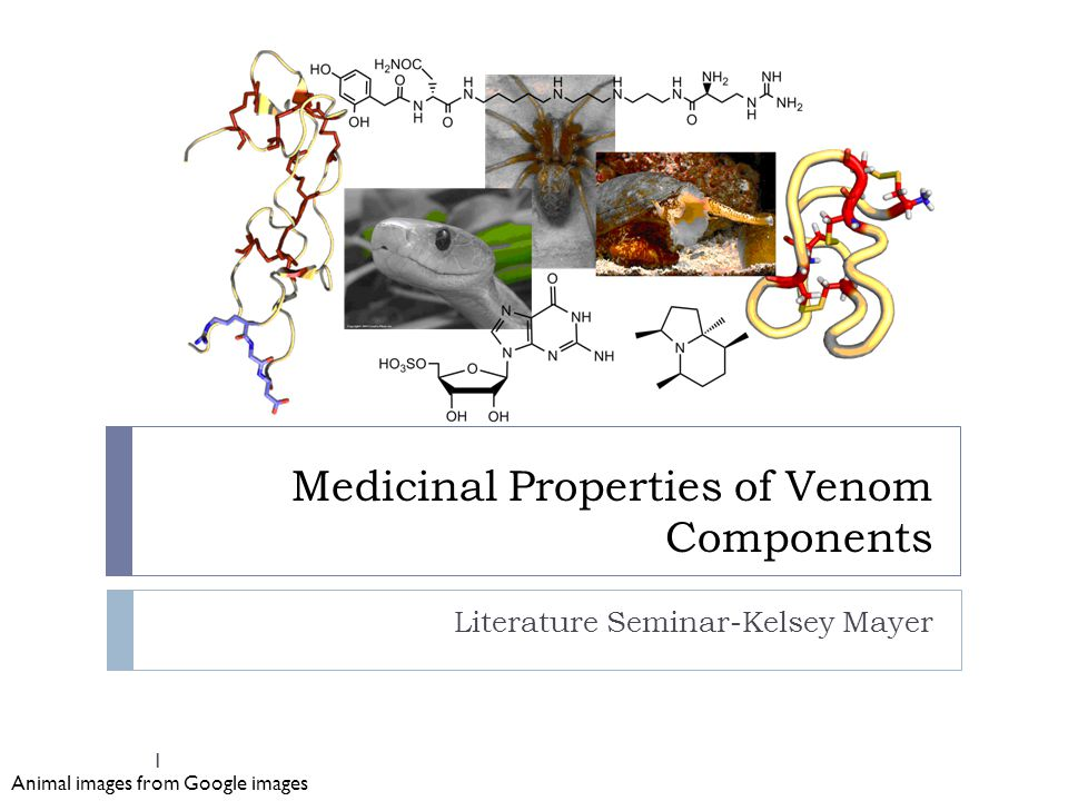 Medicinal Properties of Venom Components Literature Seminar-Kelsey Mayer Animal images from Google images 1