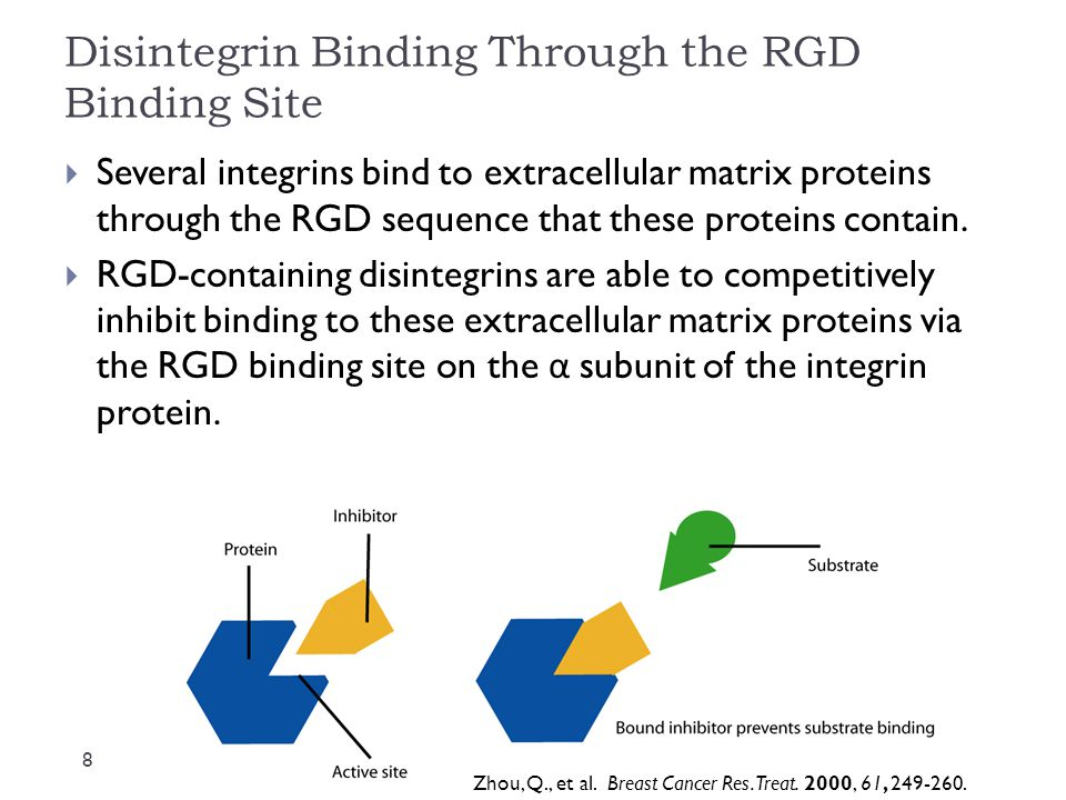 Disintegrin Binding Through the RGD Binding Site  Several integrins bind to extracellular matrix proteins through the RGD sequence that these proteins contain.