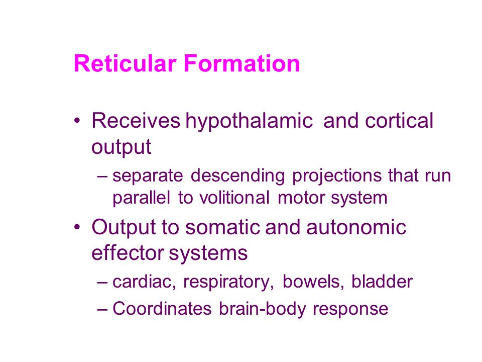 Reticular Formation Receives hypothalamic and cortical output –separate descending projections that run parallel to volitional motor system Output to somatic and autonomic effector systems –cardiac, respiratory, bowels, bladder –Coordinates brain-body response