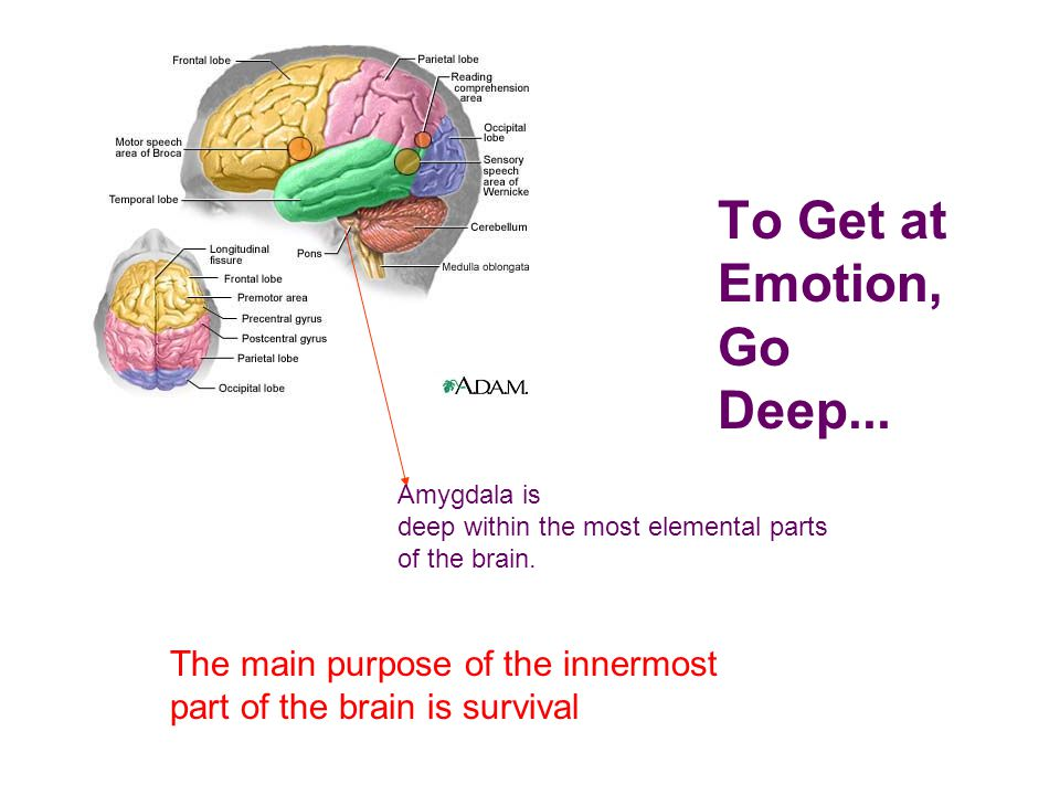 Cognition and Emotion The brain's shortcut for emotions