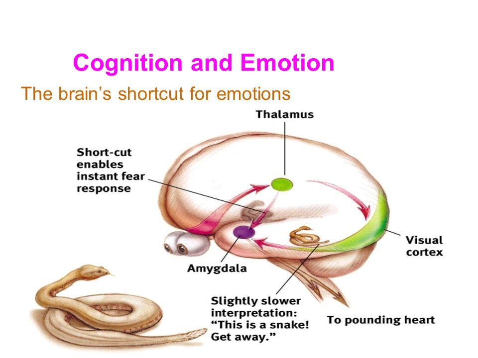 Brain Structures That Mediate Emotion Hypothalamus Limbic System –limbic cortex –amygdala Brainstem