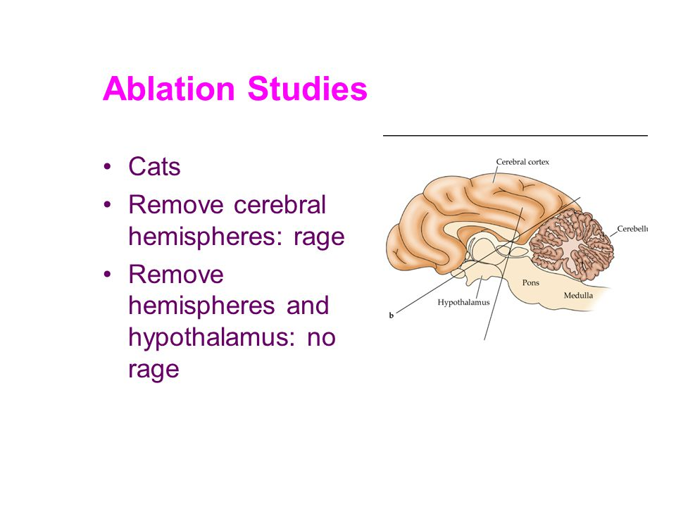 Ablation Studies Cats Remove cerebral hemispheres: rage Remove hemispheres and hypothalamus: no rage