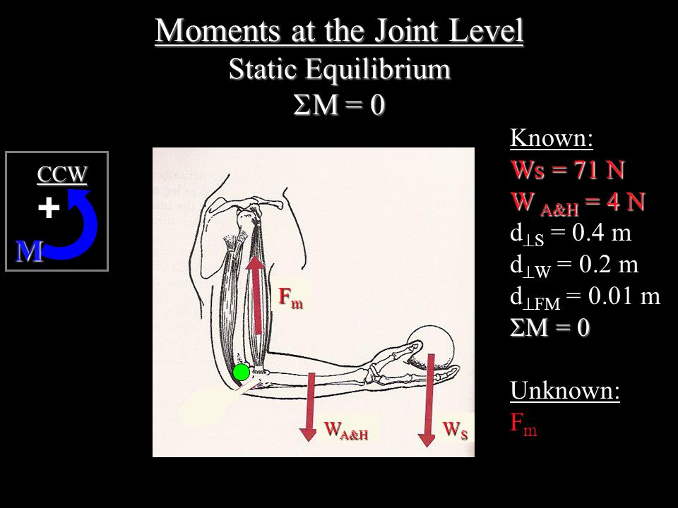 Moments at the Joint Level Static Equilibrium  M = 0 M +CCW Known: Ws = 71 N W A&H = 4 N d  S = 0.4 m d  W = 0.2 m d  FM = 0.01 m  M = 0 Unknown: F m FmFmFmFm W A&H WSWSWSWS