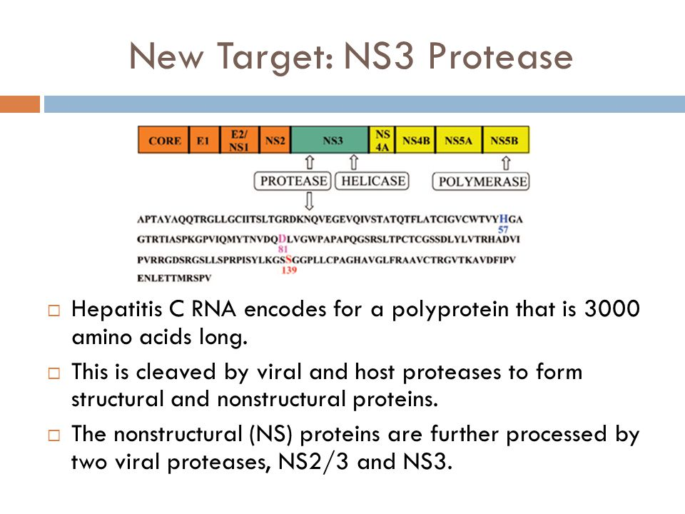 New Target: NS3 Protease  Hepatitis C RNA encodes for a polyprotein that is 3000 amino acids long.