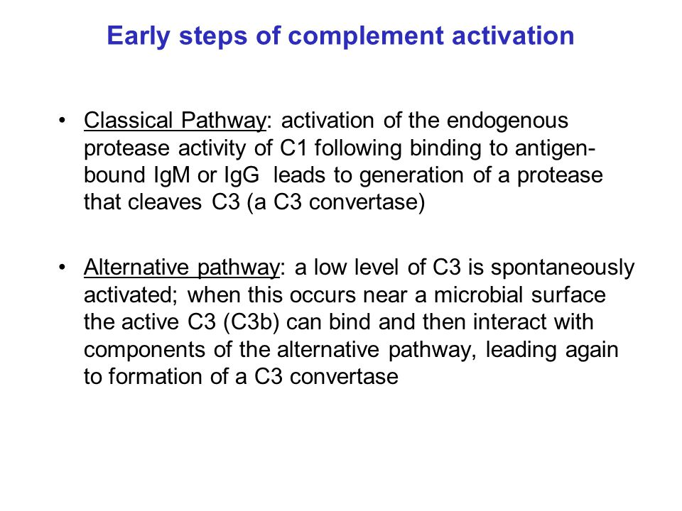 Early steps of complement activation Classical Pathway: activation of the endogenous protease activity of C1 following binding to antigen- bound IgM o