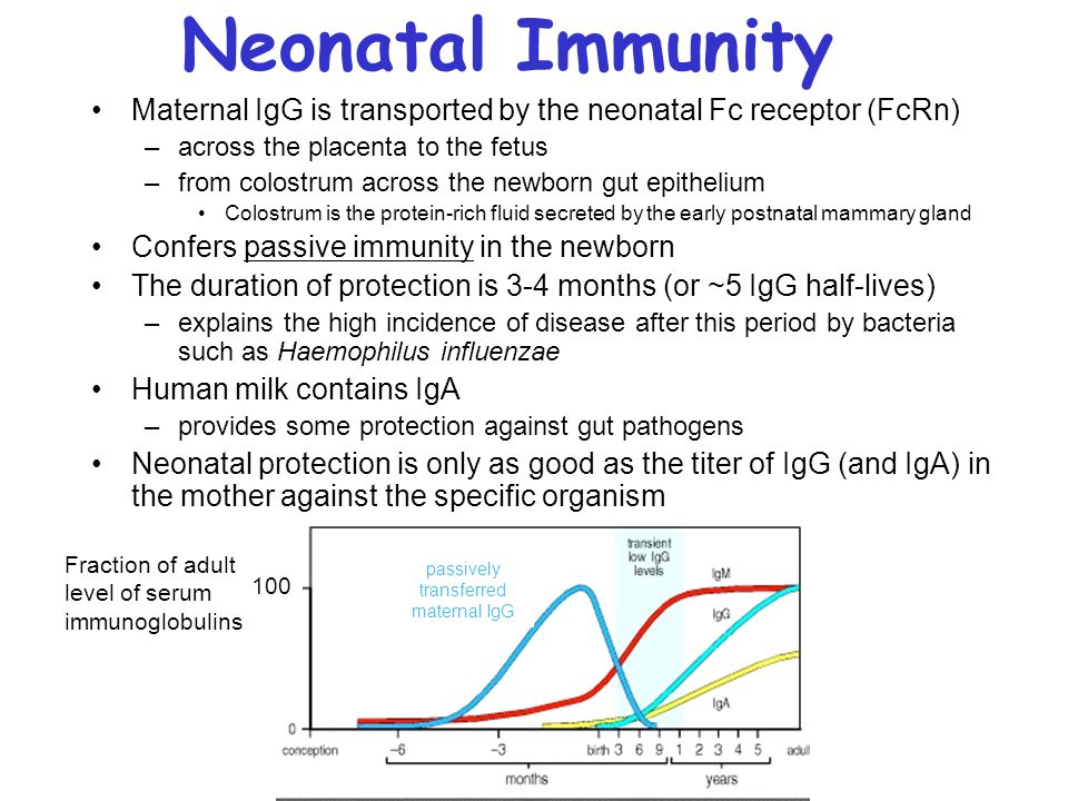 Neonatal Immunity Maternal IgG is transported by the neonatal Fc receptor (FcRn) –across the placenta to the fetus –from colostrum across the newborn