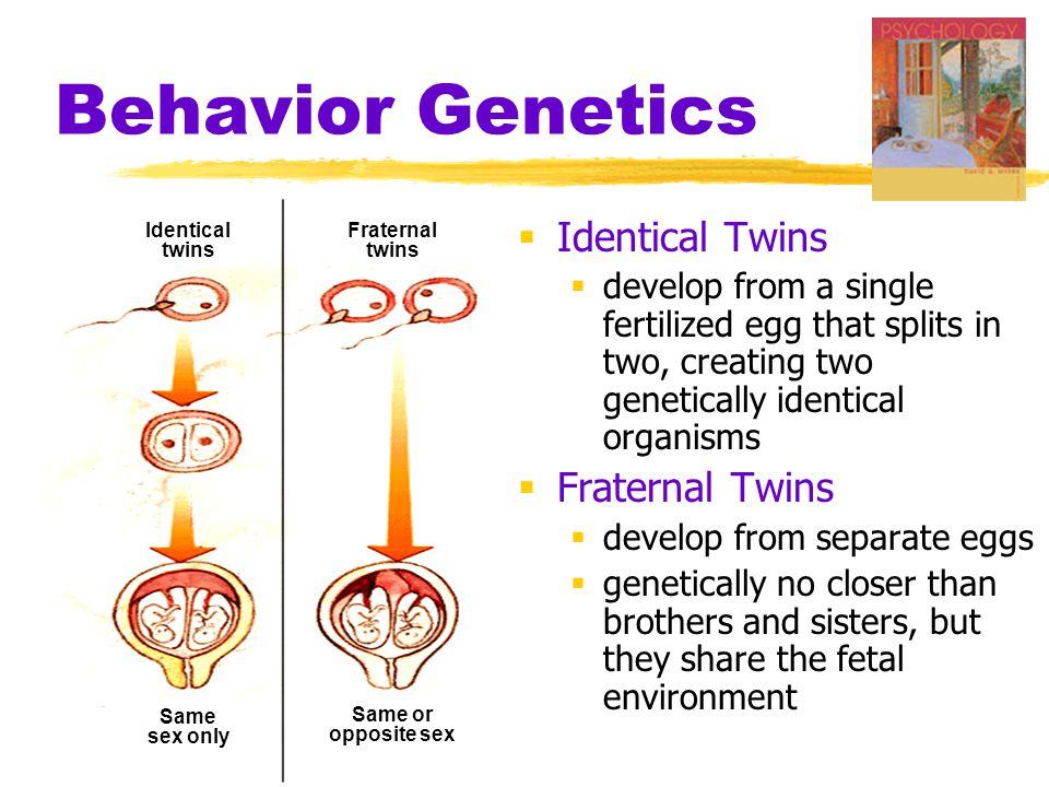 Behavior Genetics  Identical Twins  develop from a single fertilized egg that splits in two, creating two genetically identical organisms  Fraterna