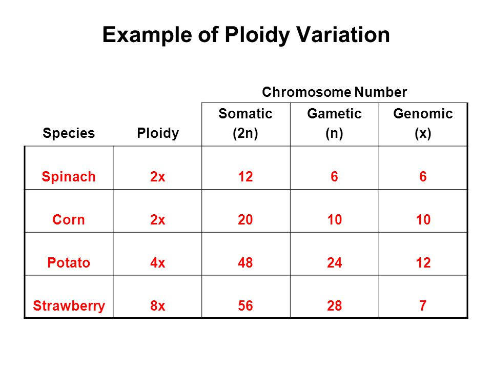 Example of Ploidy Variation Chromosome Number SpeciesPloidy Somatic (2n) Gametic (n) Genomic (x) Spinach2x1266 Corn2x2010 Potato4x482412 Strawberry8x5