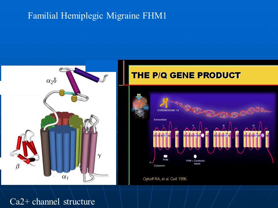   22 11 Ca2+ channel structure Familial Hemiplegic Migraine FHM1