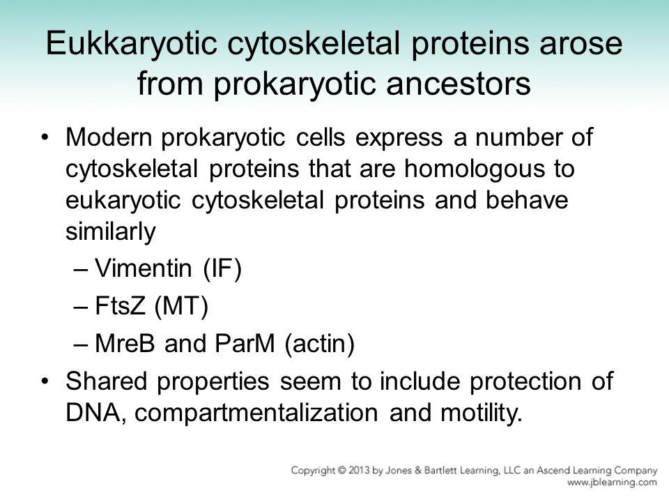 Eukkaryotic cytoskeletal proteins arose from prokaryotic ancestors Modern prokaryotic cells express a number of cytoskeletal proteins that are homolog