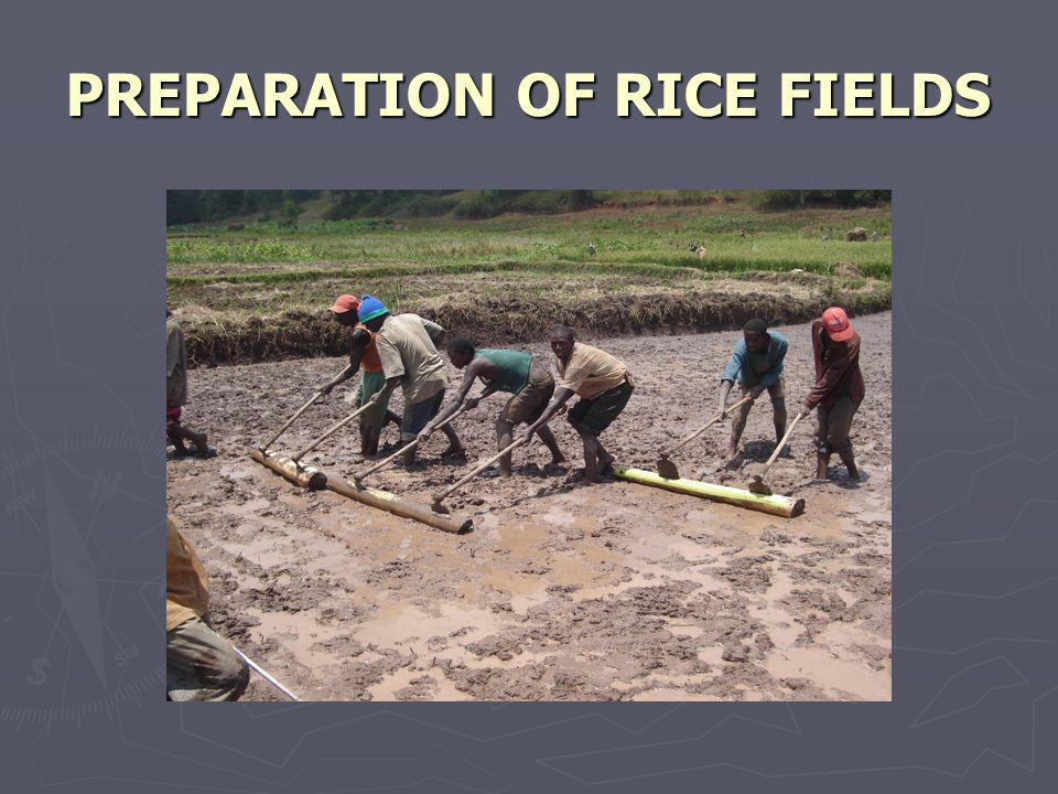 PREPARATION OF RICE FIELDS