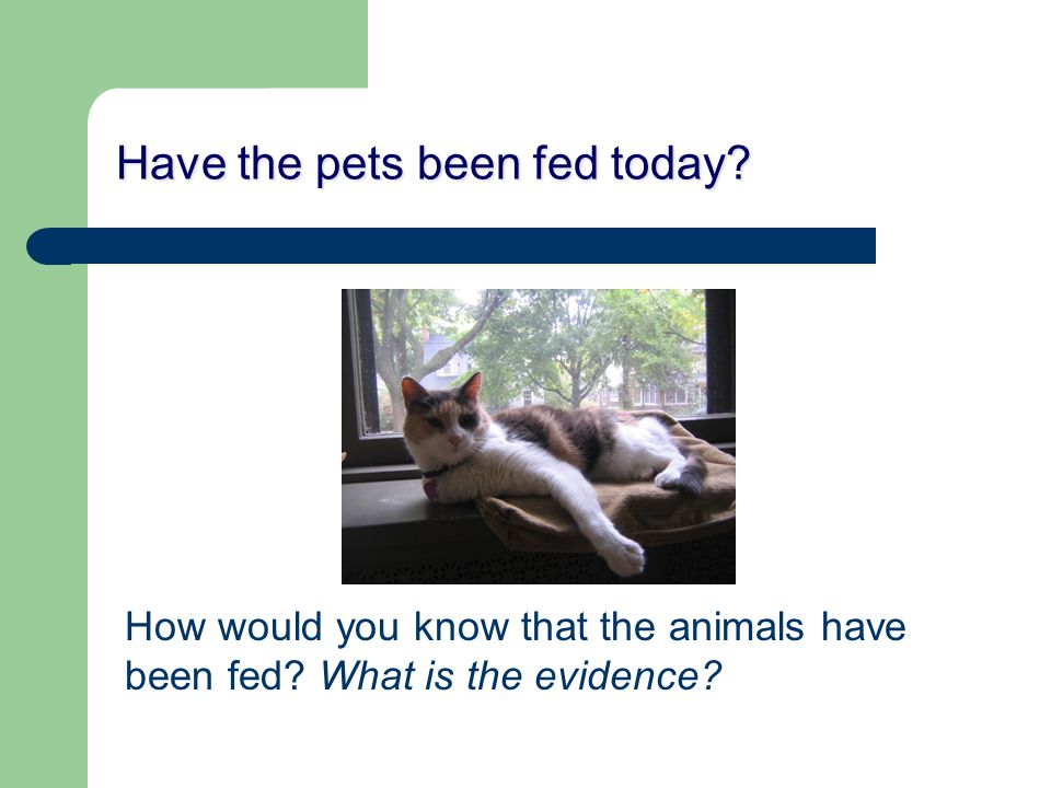 Have the pets been fed today. How would you know that the animals have been fed.