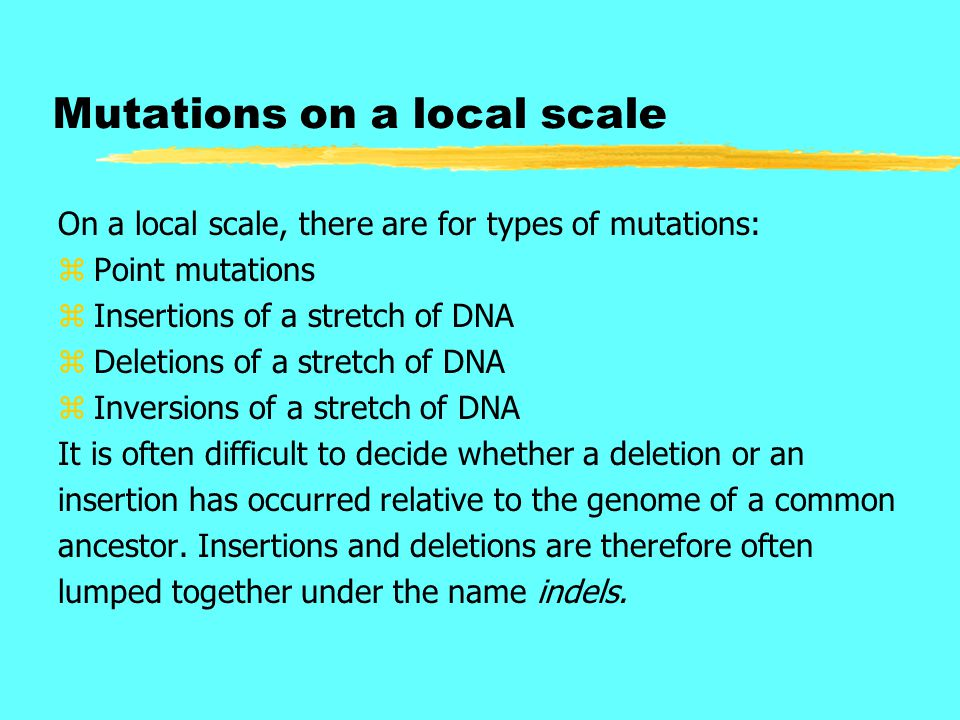 Mutations on a local scale On a local scale, there are for types of mutations: zPoint mutations zInsertions of a stretch of DNA zDeletions of a stretc
