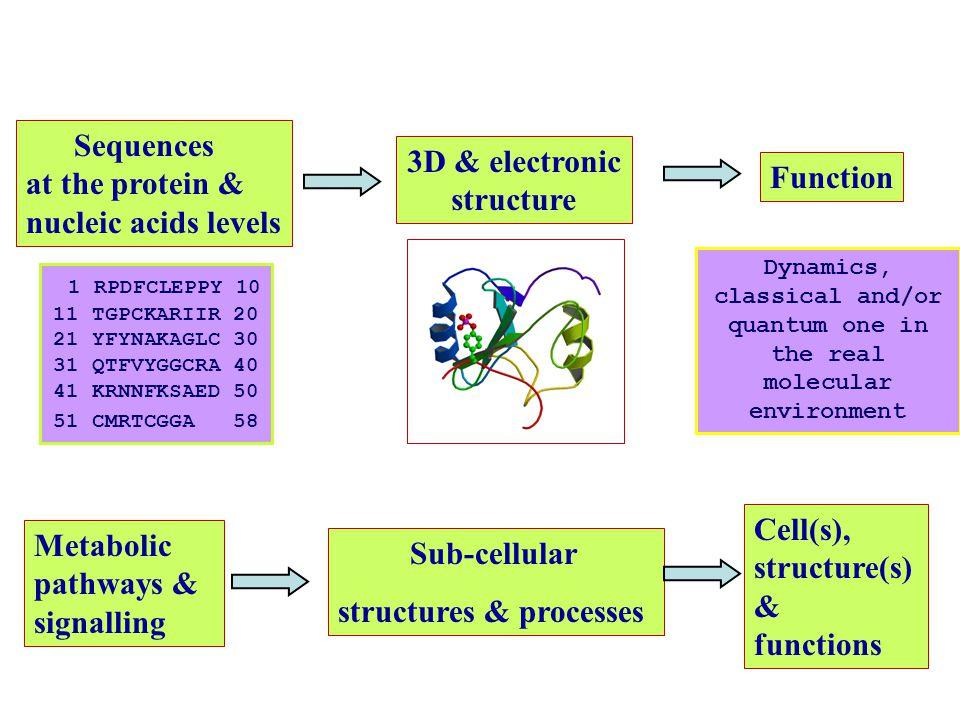 Determination of biomolecular structures X-ray and neutron diffraction data NMR Molecular quantum mechanics.