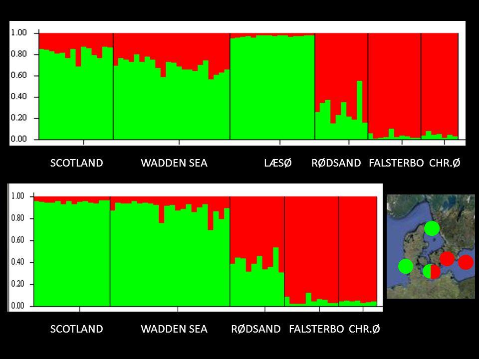 SCOTLAND WADDEN SEA LÆSØ RØDSAND FALSTERBO CHR.Ø SCOTLAND WADDEN SEA RØDSAND FALSTERBO CHR.Ø