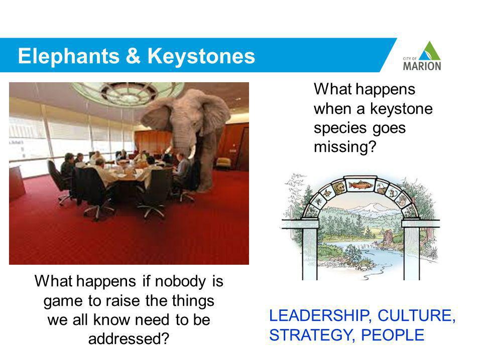 Elephants & Keystones What happens if nobody is game to raise the things we all know need to be addressed.