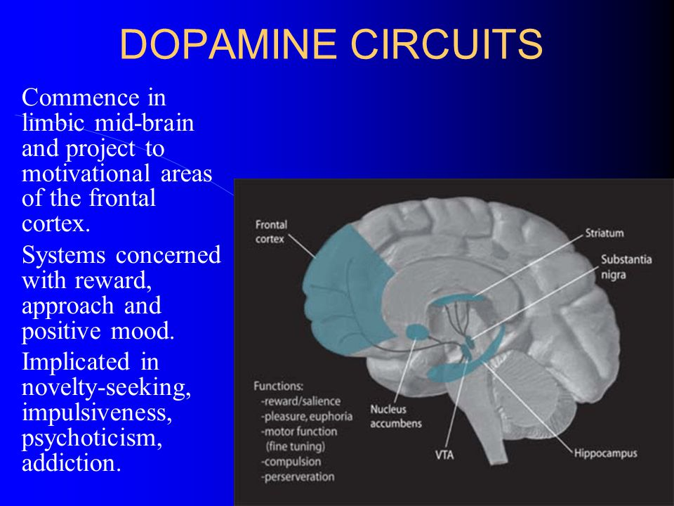 DOPAMINE CIRCUITS Commence in limbic mid-brain and project to motivational areas of the frontal cortex. Systems concerned with reward, approach and po