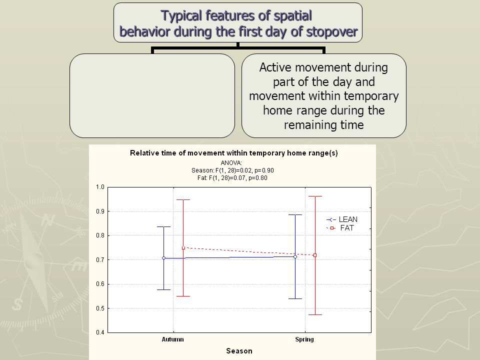 Typical features of spatial behavior during the first day of stopover Active movement during part of the day and movement within temporary home range during the remaining time