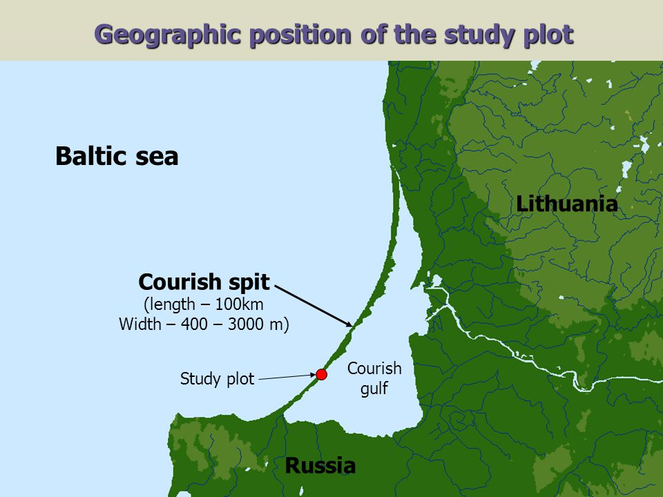 Asia Europe Atlantic ocean Africa Geographic position of the study plot Study plot Baltic sea Lithuania Courish spit (length – 100km Width – 400 – 3000 m) Courish gulf Russia