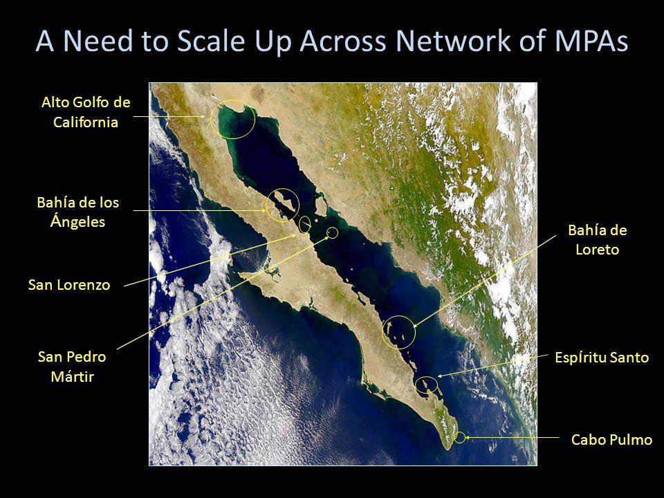 San Pedro Mártir Bah í a de Loreto Bah í a de los Á ngeles San Lorenzo A Need to Scale Up Across Network of MPAs Alto Golfo de California Esp í ritu Santo Cabo Pulmo