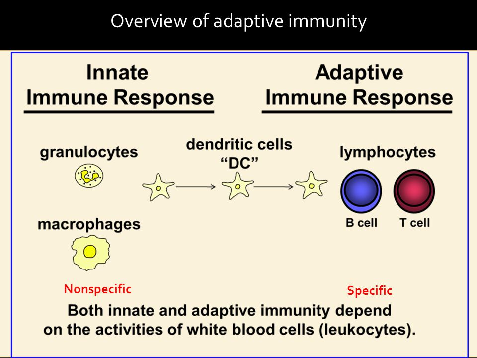 Overview of adaptive immunity Nonspecific Specific