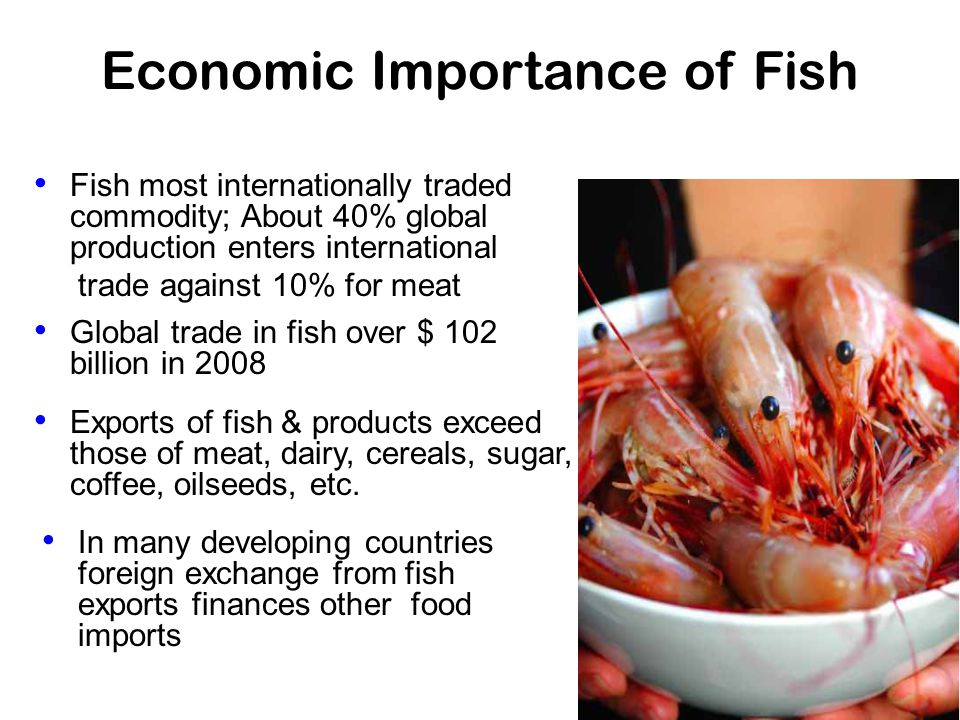 Economic Importance of Fish Fish most internationally traded commodity; About 40% global production enters international trade against 10% for meat Global trade in fish over $ 102 billion in 2008 Exports of fish & products exceed those of meat, dairy, cereals, sugar, coffee, oilseeds, etc.