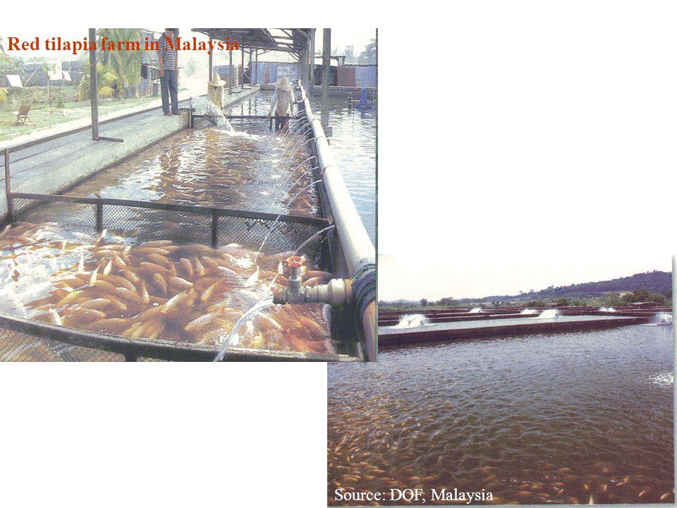 Red tilapia farm in Malaysia Source: DOF, Malaysia