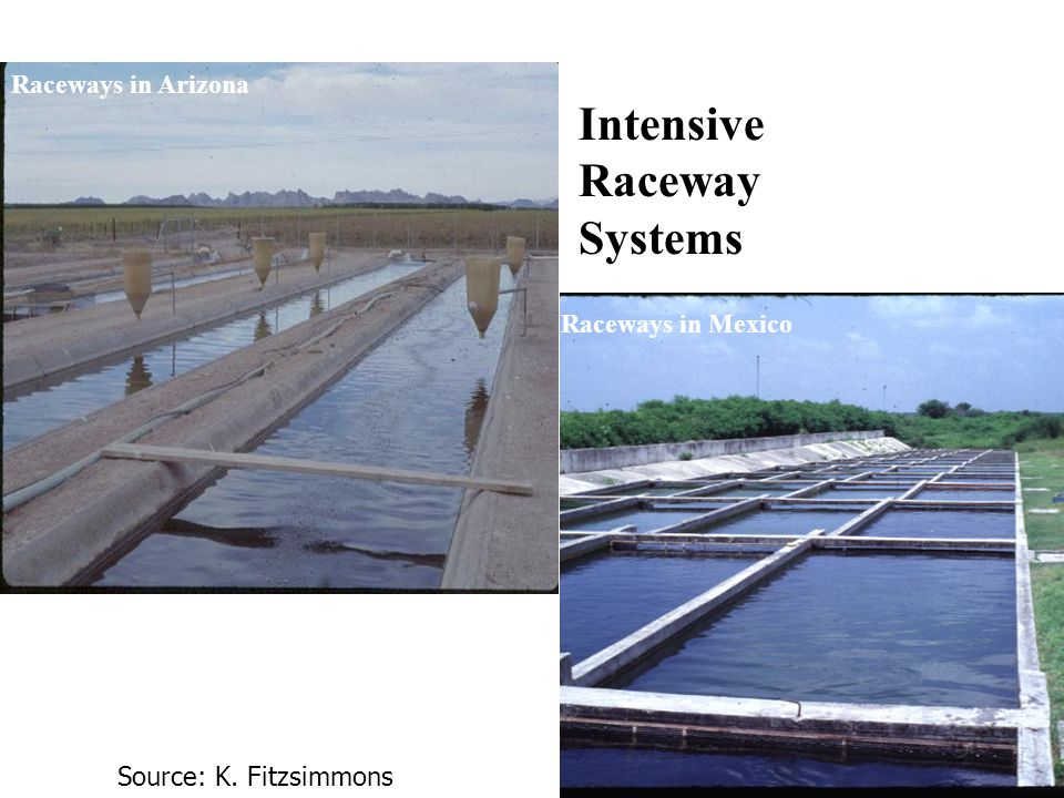 Raceways in Arizona Source: K. Fitzsimmons Raceways in Mexico Intensive Raceway Systems