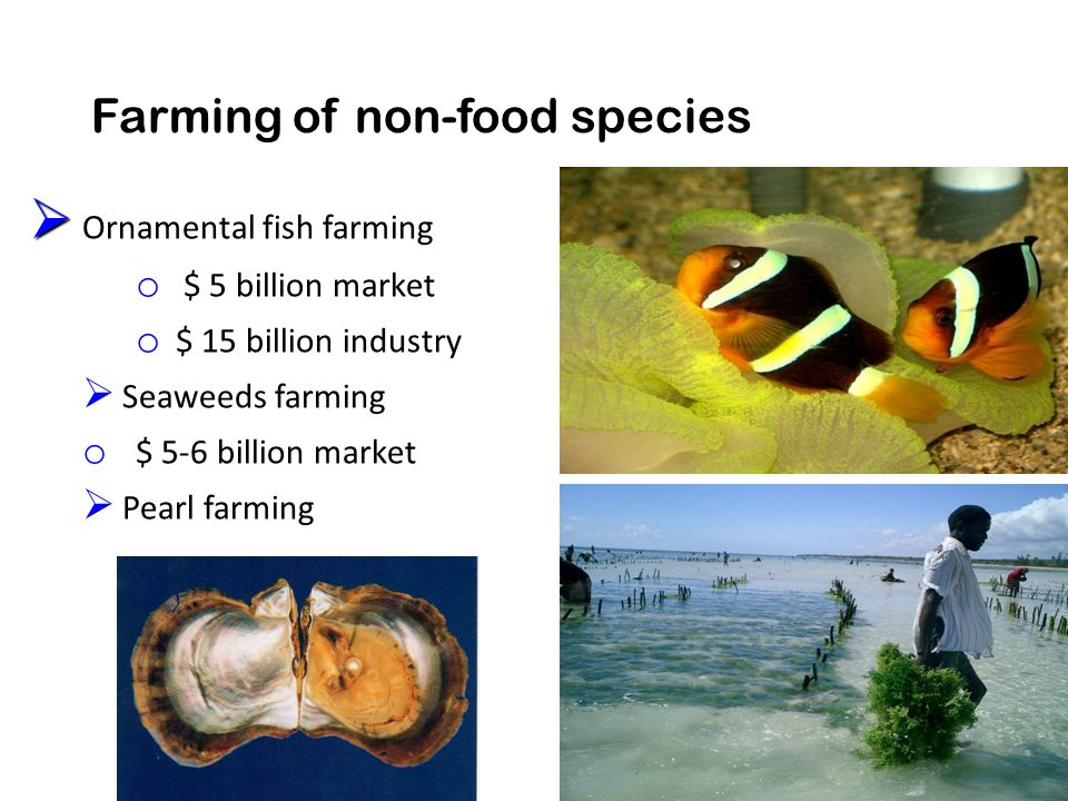 Farming of non-food species   Ornamental fish farming o $ 5 billion market o $ 15 billion industry  Seaweeds farming o $ 5-6 billion market  Pearl