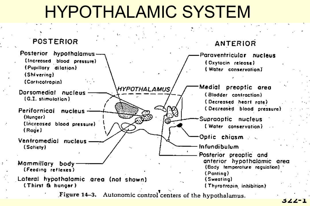 HYPOTHALAMIC SYSTEM 322-1