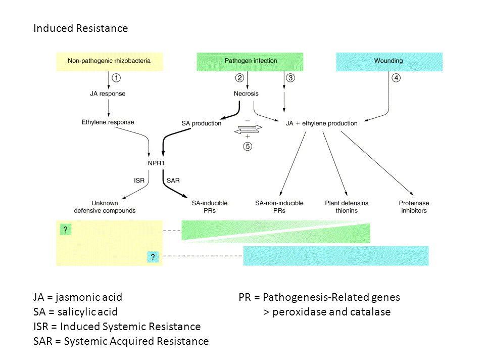 Induced Resistance JA = jasmonic acid SA = salicylic acid ISR = Induced Systemic Resistance SAR = Systemic Acquired Resistance PR = Pathogenesis-Relat