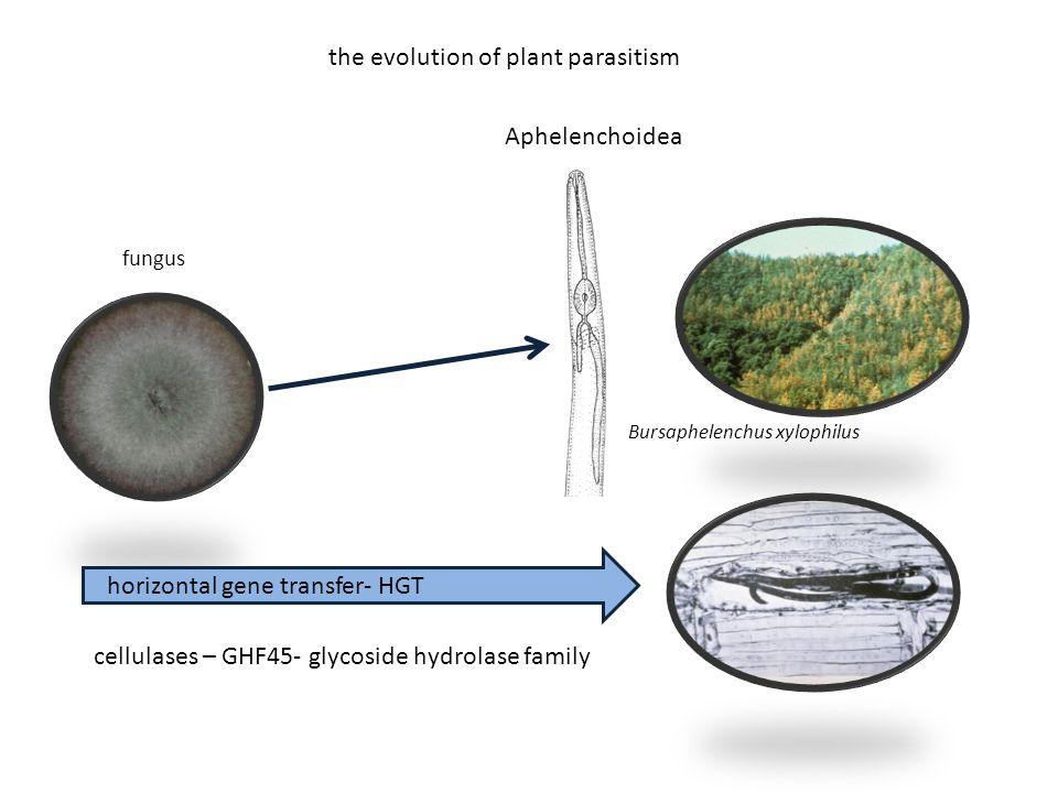 Bursaphelenchus xylophilus Aphelenchoidea fungus horizontal gene transfer- HGT cellulases – GHF45- glycoside hydrolase family the evolution of plant p