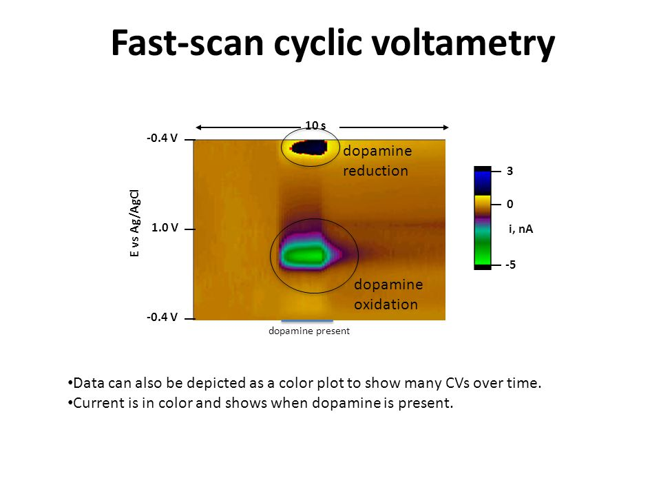 Fast-scan cyclic voltametry -0.4 V 1.0 V -0.4 V 10 s -5 0 3 i, nAE vs Ag/AgCl -0.4 V 1.0 V -0.4 V 10 s -5 0 3 i, nA E vs Ag/AgCl Data can also be depicted as a color plot to show many CVs over time.