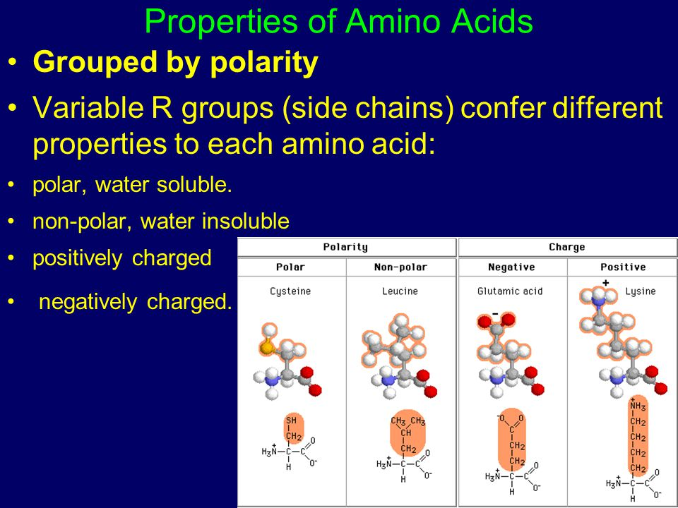 Properties of Amino Acids Grouped by polarity Variable R groups (side chains) confer different properties to each amino acid: polar, water soluble. no