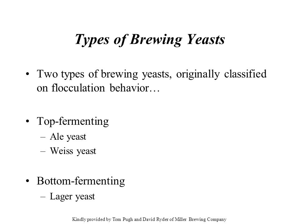 Types of Brewing Yeasts Two types of brewing yeasts, originally classified on flocculation behavior… Top-fermenting –Ale yeast –Weiss yeast Bottom-fer