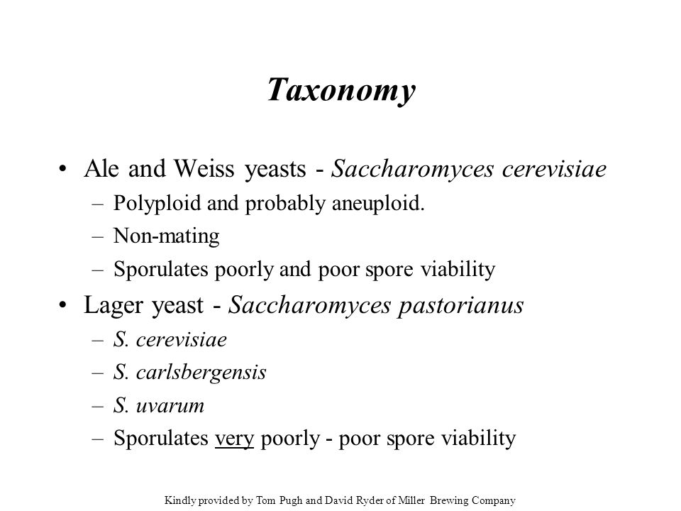 Taxonomy Ale and Weiss yeasts - Saccharomyces cerevisiae –Polyploid and probably aneuploid. –Non-mating –Sporulates poorly and poor spore viability La
